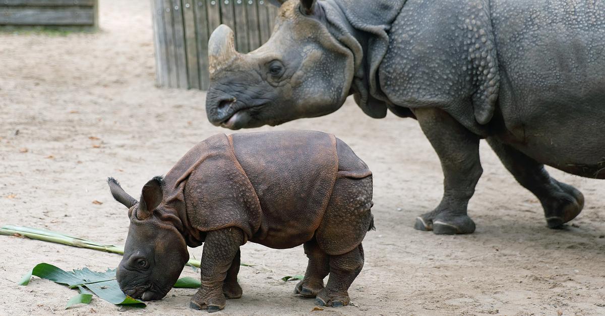 Stuttgarter Zoo muss Nashorn