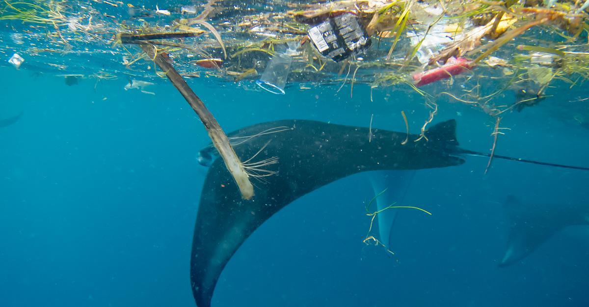 Wege aus der Plastikkrise: Der 15-Punkte-Plan der Umweltverbände im Check
