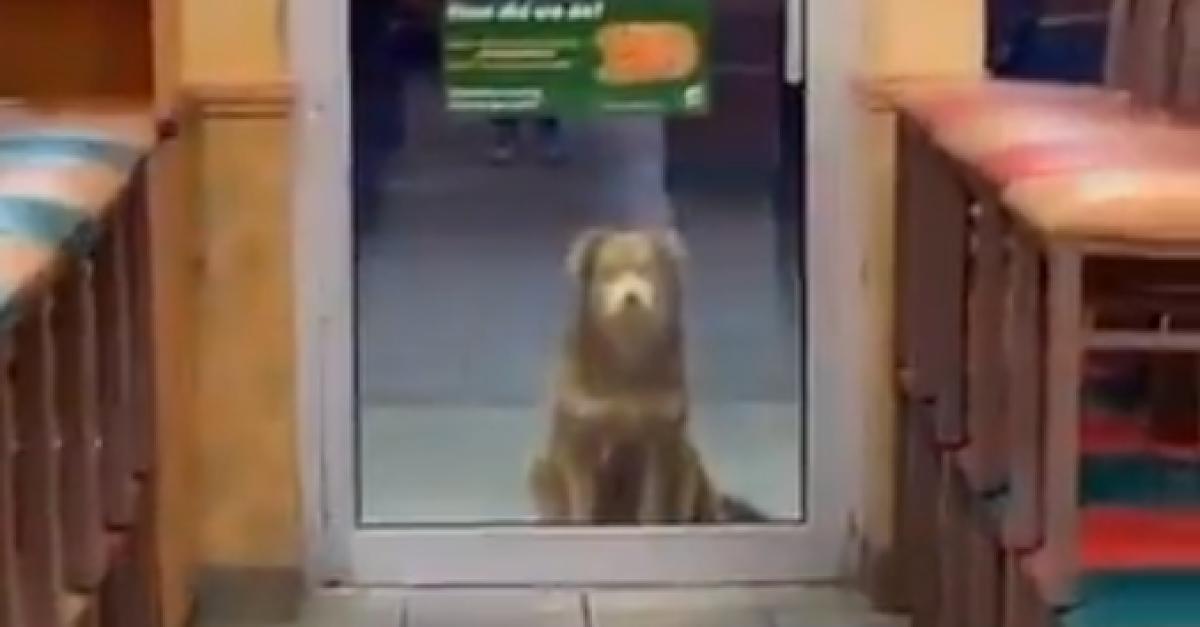Wartet geduldig vor Filiale: Straßenhund schaut jeden Abend bei Subway für eine Mahlzeit vorbei