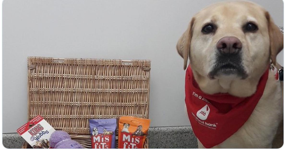 Tierischer Superspender: Stumpy hat schon mehr als 100 Hunden das Leben gerettet